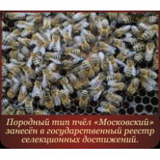 """Матки плодные с 11.05.19 по 25.05.19 Карпатская порода пчёл 54 линии, породный тип """"Московский"""""""